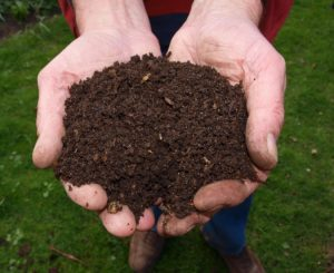 du compost frais